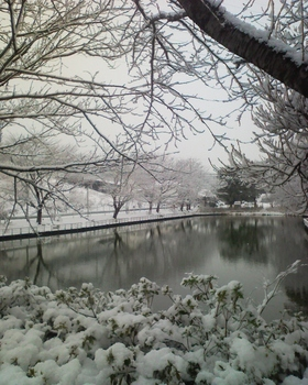 千葉 雪景色