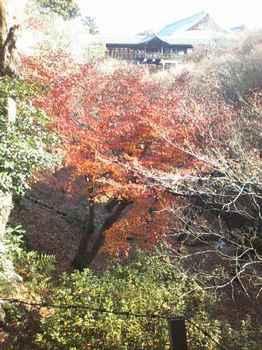 臥雲橋から通天橋を見る